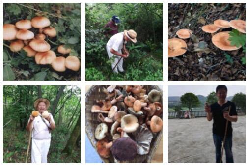 【啰唝曲一组·森山采蘑菇】
